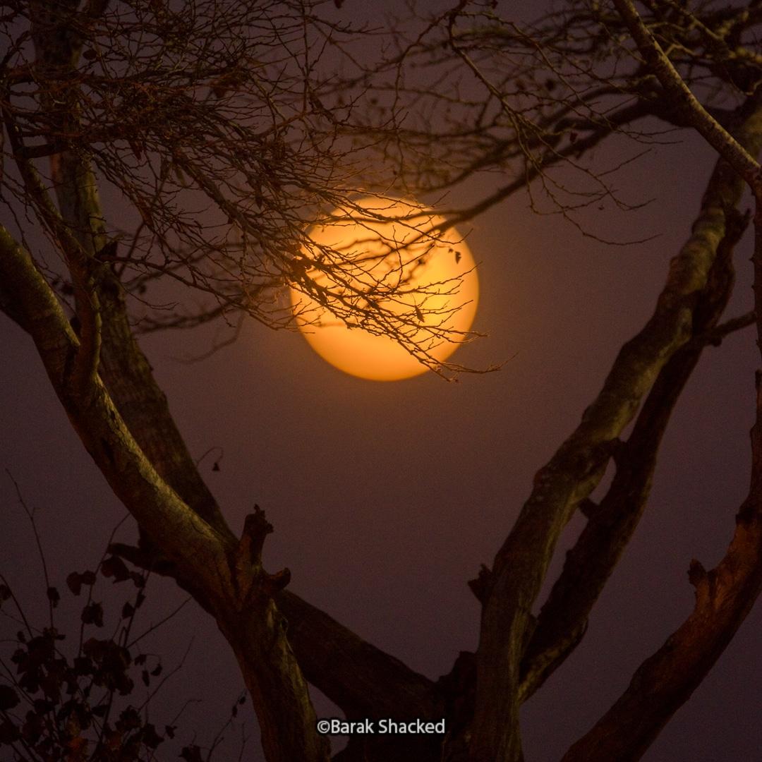 ירח מלא מאחורי עץ