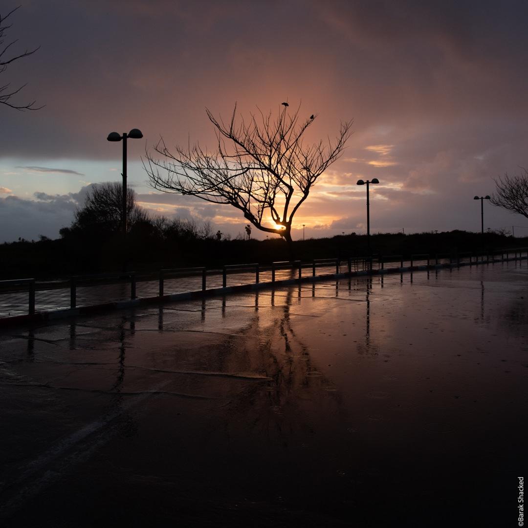 עץ בשקיעה - סדנת לייטרום - לפני עריכה